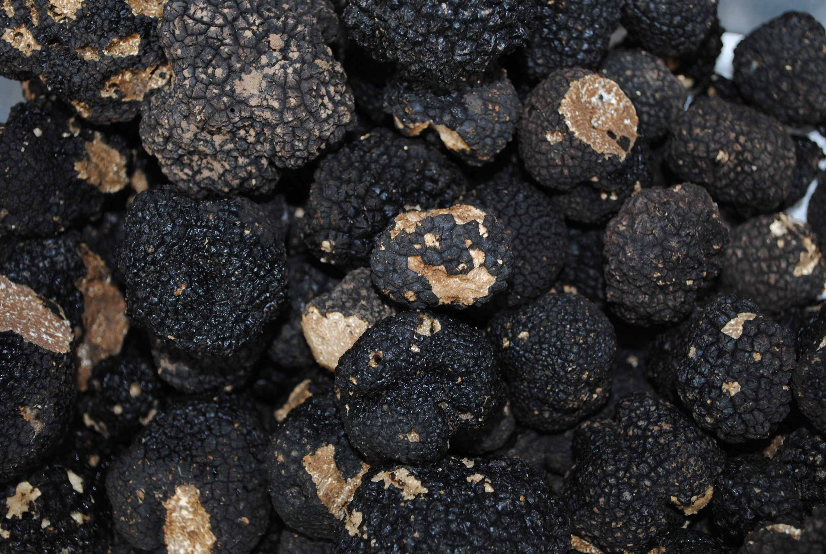 Fresh Black Truffles