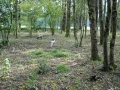 Lagotto Romagnolo Hunting Truffles