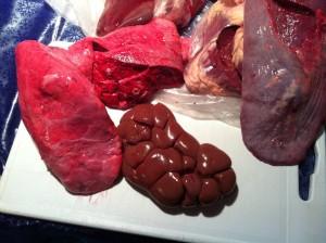 Beef Organs Barf